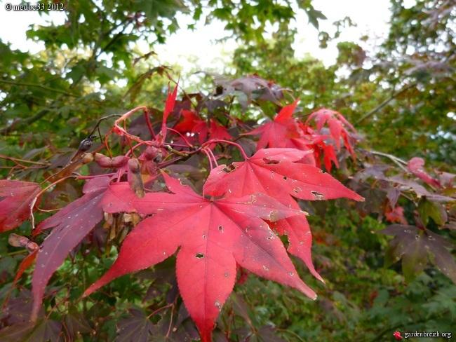 Mon jardin Médocain, quelques vues au fil du temps GBPIX_photo_550054