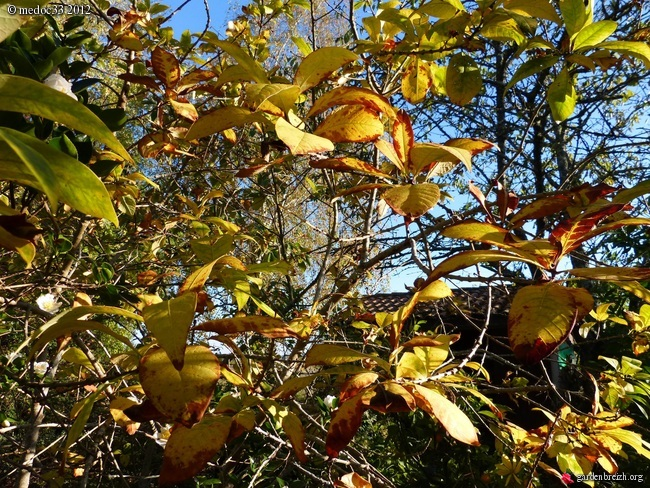 Mon jardin Médocain, quelques vues au fil du temps GBPIX_photo_550098