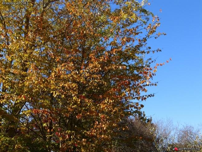 Mon jardin Médocain, quelques vues au fil du temps GBPIX_photo_551141