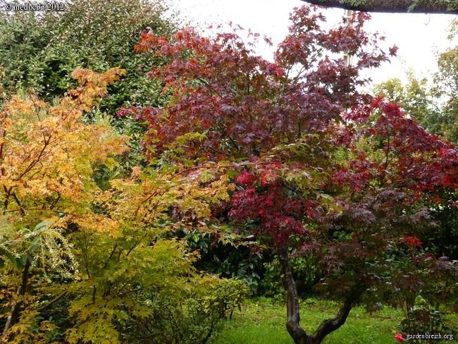 Mon jardin Médocain, quelques vues au fil du temps GBPIX_photo_551149