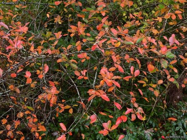 Mon jardin Médocain, quelques vues au fil du temps GBPIX_photo_551150
