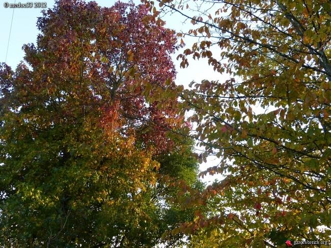 Mon jardin Médocain, quelques vues au fil du temps GBPIX_photo_551151