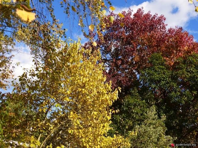 Mon jardin Médocain, quelques vues au fil du temps GBPIX_photo_551152