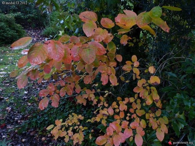 Mon jardin Médocain, quelques vues au fil du temps GBPIX_photo_551154