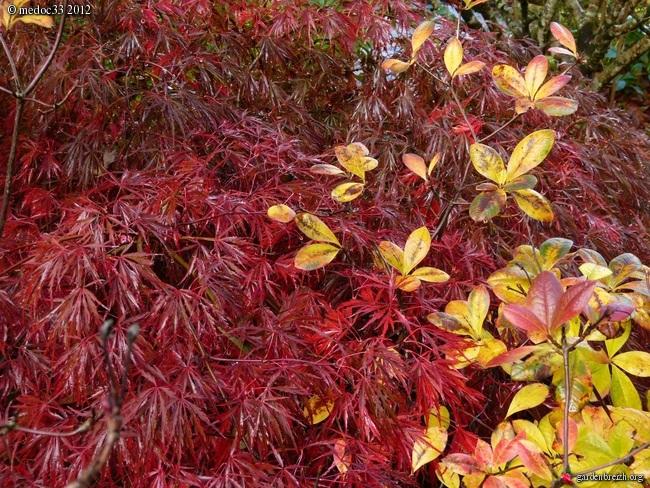 Mon jardin Médocain, quelques vues au fil du temps GBPIX_photo_551155