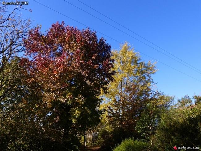 Mon jardin Médocain, quelques vues au fil du temps GBPIX_photo_551156