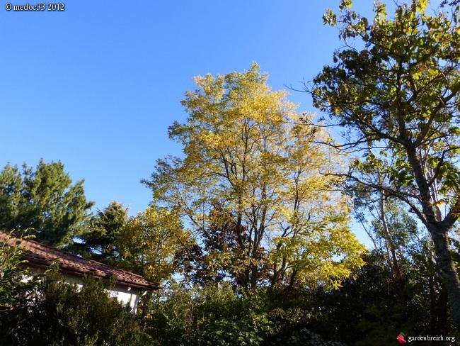 Mon jardin Médocain, quelques vues au fil du temps GBPIX_photo_551158