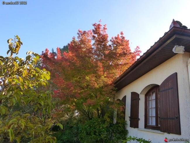 Mon jardin Médocain, quelques vues au fil du temps GBPIX_photo_551160