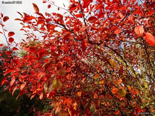 Mon jardin Médocain, quelques vues au fil du temps GBPIX_photo_551670
