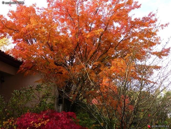 Mon jardin Médocain, quelques vues au fil du temps GBPIX_photo_551671