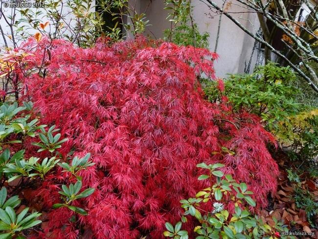 Mon jardin Médocain, quelques vues au fil du temps GBPIX_photo_551674
