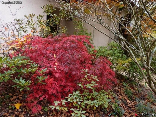 Mon jardin Médocain, quelques vues au fil du temps GBPIX_photo_551682