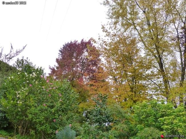 Mon jardin Médocain, quelques vues au fil du temps GBPIX_photo_551684