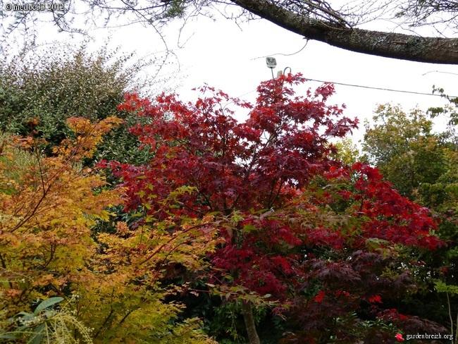 Mon jardin Médocain, quelques vues au fil du temps GBPIX_photo_551686