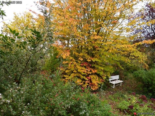 Mon jardin Médocain, quelques vues au fil du temps GBPIX_photo_551687