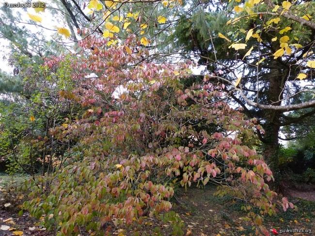 Mon jardin Médocain, quelques vues au fil du temps GBPIX_photo_551688