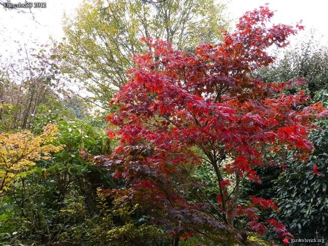 Mon jardin Médocain, quelques vues au fil du temps GBPIX_photo_551690