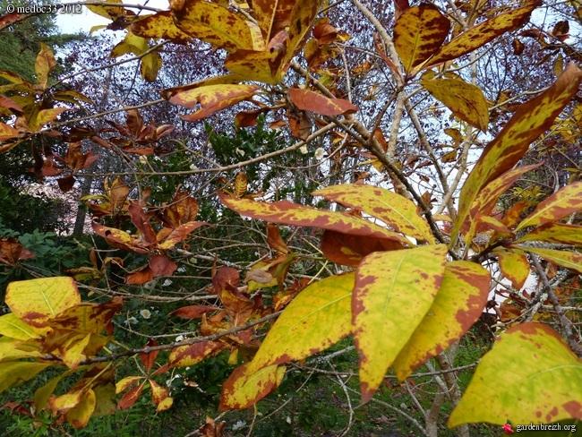 Mon jardin Médocain, quelques vues au fil du temps GBPIX_photo_551692