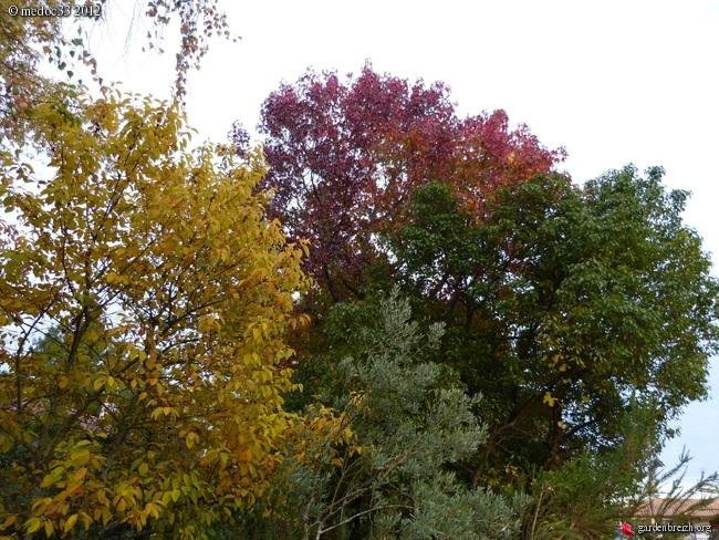 Mon jardin Médocain, quelques vues au fil du temps GBPIX_photo_551693