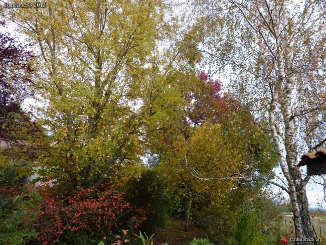 Mon jardin Médocain, quelques vues au fil du temps GBPIX_photo_551694