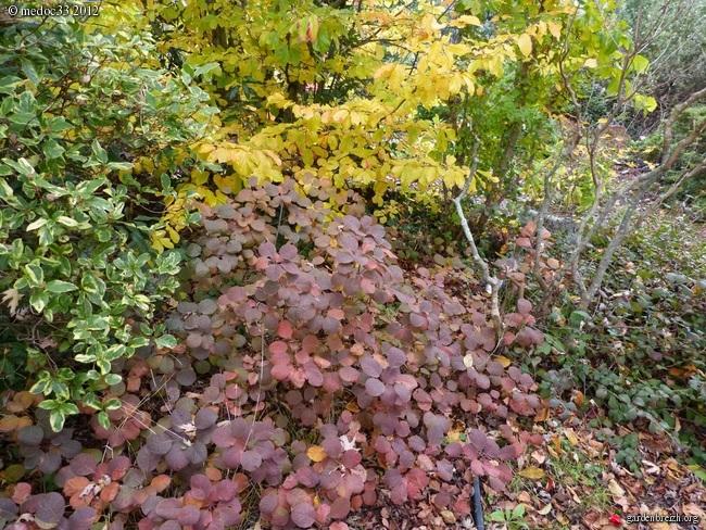 Mon jardin Médocain, quelques vues au fil du temps GBPIX_photo_551696