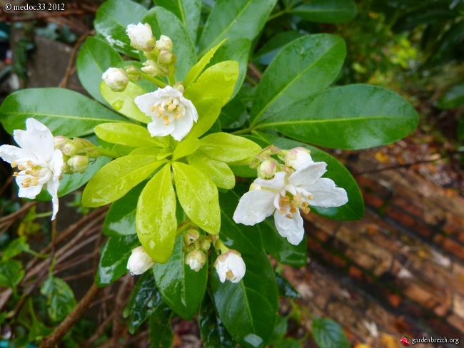 Mon jardin Médocain, quelques vues au fil du temps GBPIX_photo_551709