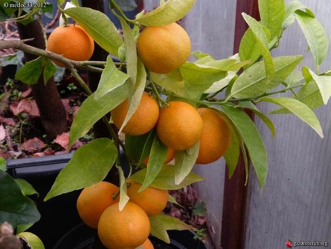 Mon jardin Médocain, quelques vues au fil du temps GBPIX_photo_551721