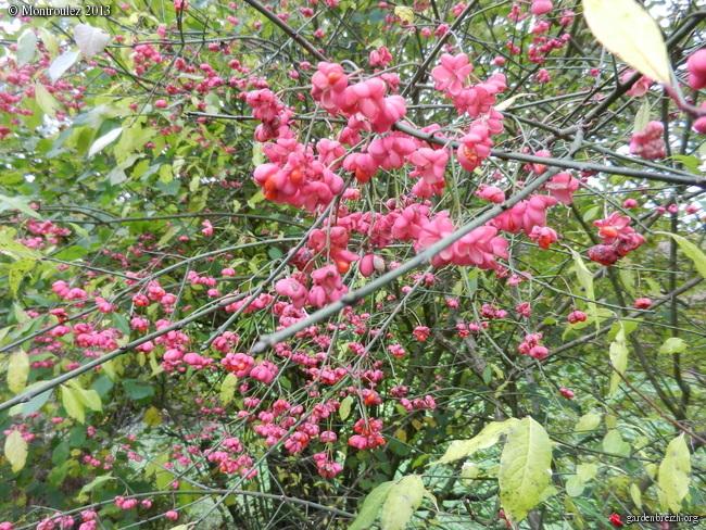 Arbuste qui a poussé tout seul GBPIX_photo_566014