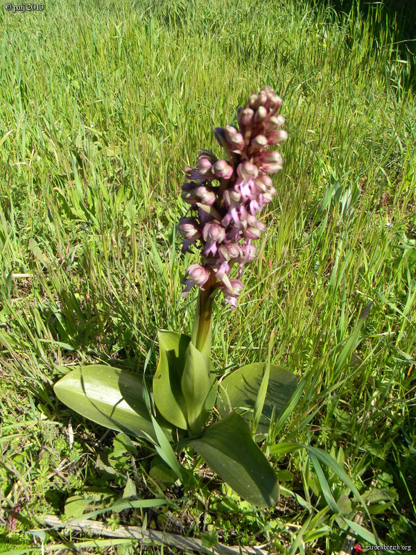Les botanistes  - Page 6 GBPIX_photo_569468