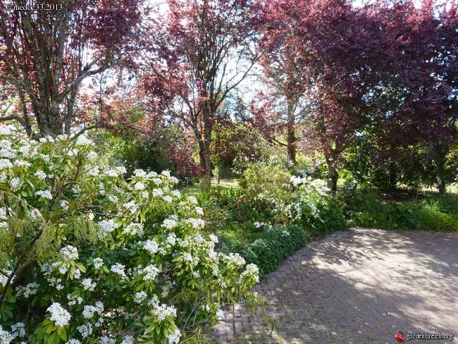 Mon jardin Médocain, quelques vues au fil du temps - Page 2 GBPIX_photo_573723