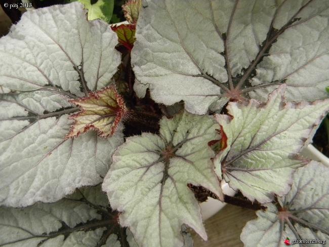 Les botanistes  - Page 7 GBPIX_photo_574228