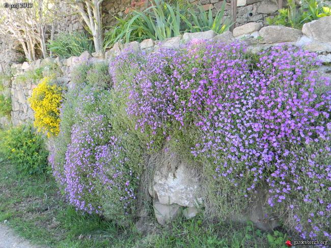 Les botanistes  - Page 5 GBPIX_photo_576515