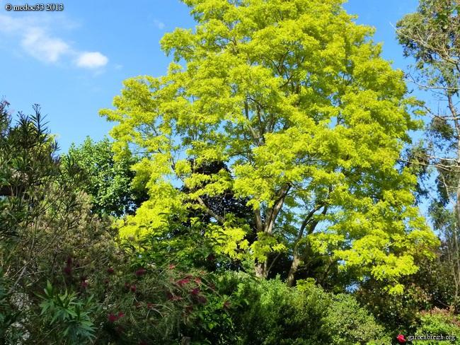 floraisons des arbres et des arbustes - Page 5 GBPIX_photo_582458