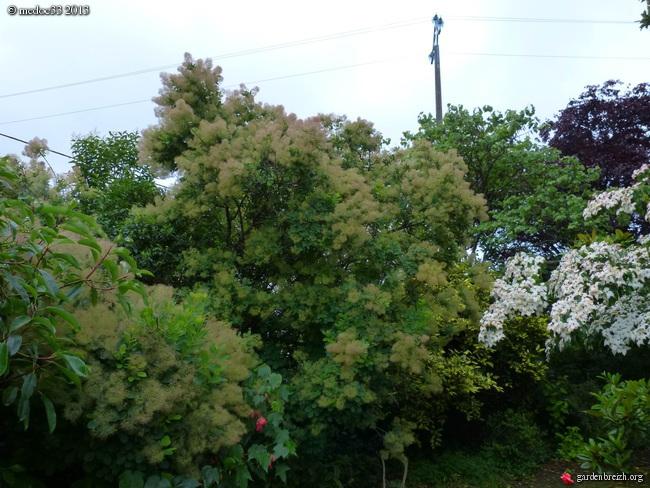 floraisons des arbres et des arbustes - Page 5 GBPIX_photo_582529