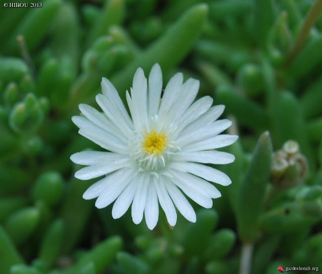 floraisons d'octobre - Page 9 GBPIX_photo_587737