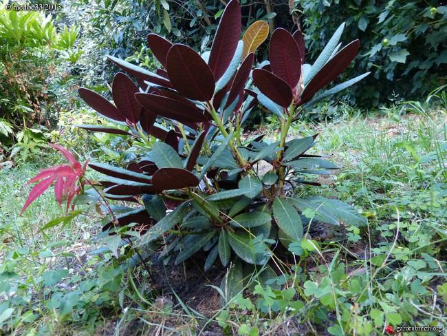 Mon jardin Médocain, quelques vues au fil du temps - Page 2 GBPIX_photo_589758