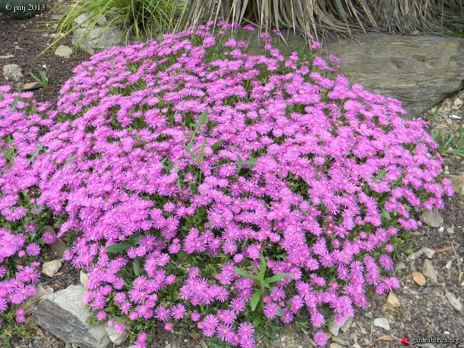 Les botanistes  - Page 8 GBPIX_photo_590495