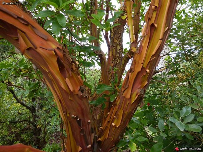 Mon jardin Médocain, quelques vues au fil du temps - Page 3 GBPIX_photo_594224