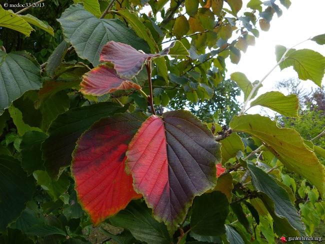 Mon jardin Médocain, quelques vues au fil du temps - Page 3 GBPIX_photo_596085
