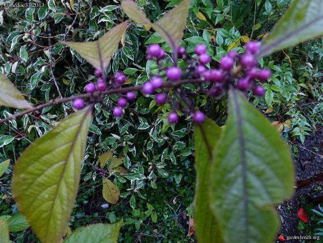 Mon jardin Médocain, quelques vues au fil du temps - Page 3 GBPIX_photo_597690