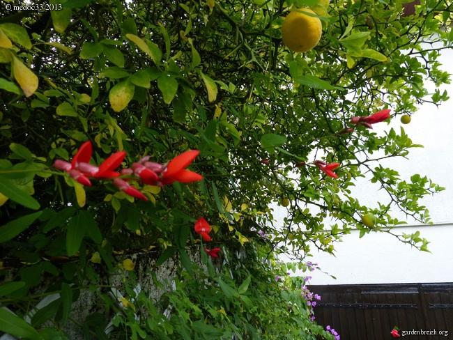 Mon jardin Médocain, quelques vues au fil du temps - Page 2 GBPIX_photo_598386