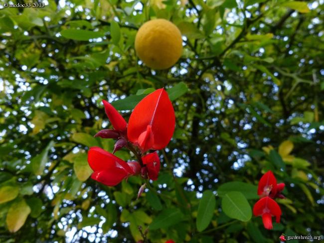 Mon jardin Médocain, quelques vues au fil du temps - Page 2 GBPIX_photo_598390