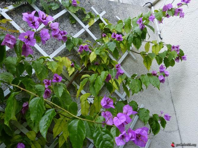 Mon jardin Médocain, quelques vues au fil du temps - Page 2 GBPIX_photo_598393