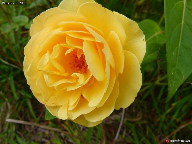 Mon jardin Médocain, quelques vues au fil du temps - Page 2 GBPIX_photo_598419