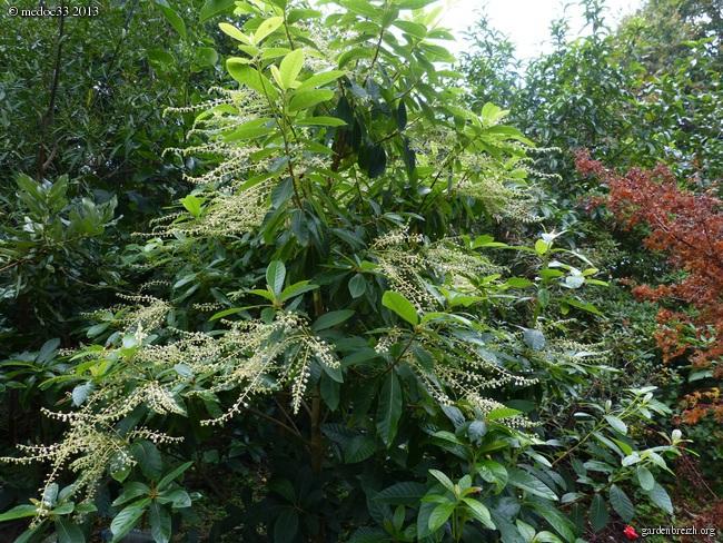 Mon jardin Médocain, quelques vues au fil du temps - Page 2 GBPIX_photo_598440