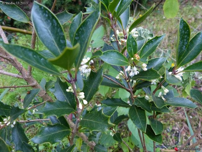 Mon jardin Médocain, quelques vues au fil du temps - Page 2 GBPIX_photo_599086