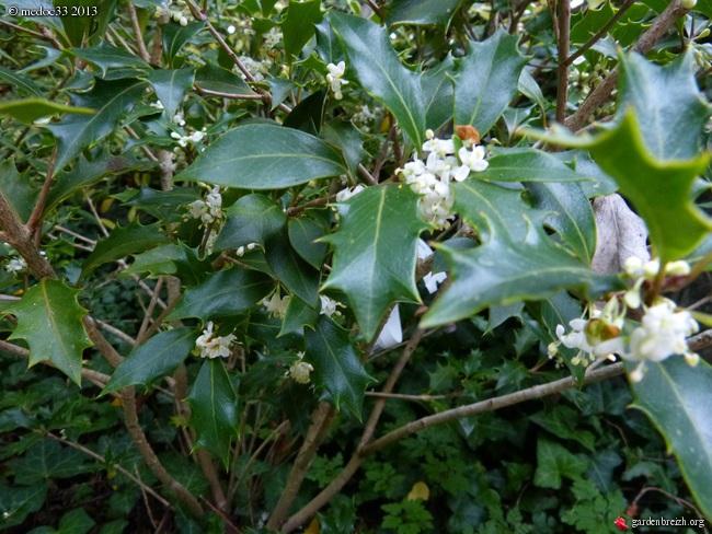 Mon jardin Médocain, quelques vues au fil du temps - Page 2 GBPIX_photo_599087