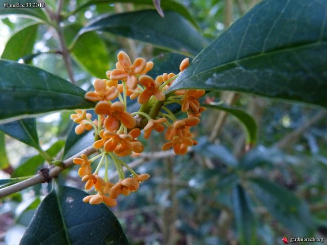 Mon jardin Médocain, quelques vues au fil du temps - Page 2 GBPIX_photo_599093