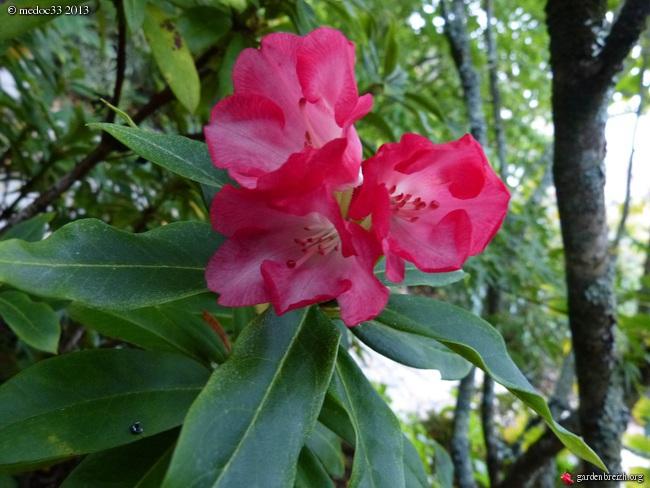Mon jardin Médocain, quelques vues au fil du temps - Page 2 GBPIX_photo_599097