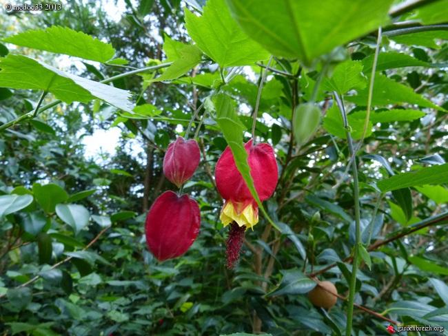 Mon jardin Médocain, quelques vues au fil du temps - Page 2 GBPIX_photo_599100